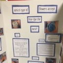 Science Fair Projects photo album thumbnail 8